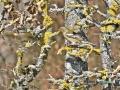 2020-03-27-Vögel-Eichhörnchen-139-RZL