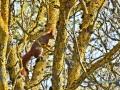 2020-03-27-Vögel-Eichhörnchen-149-RZL