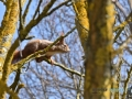 2020-03-27-Vögel-Eichhörnchen-151-RZL