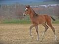 2021-04-10-Pferde-Fohlen-Balthasar-065-RZ1L