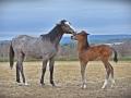 2021-04-10-Pferde-Fohlen-Balthasar-087-RZL