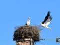 Storch-Vogel-Maus-016-RZL
