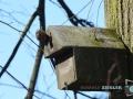 Storch-Vogel-Maus-050-RZL