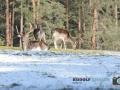 Wildgehege Hufeisen 021-RZL