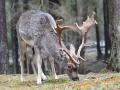 Wildgehege Hufeisen 050-Bearb (1600x1200)