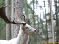 Wildgehege Veldensteiner Forst 040-A-S - 1600x1200